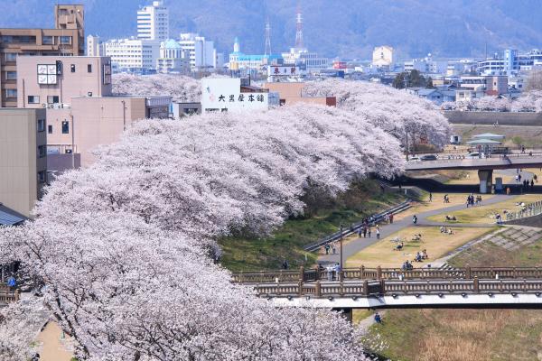 박스_핫스폿(후쿠이벚꽃축제).jpg
