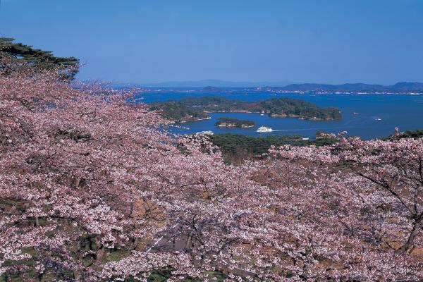 서브02_마츠시마_벚꽃.jpg