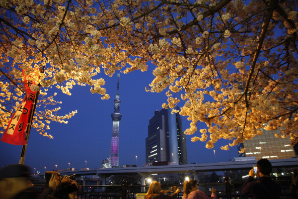 도쿄_메인a.jpg