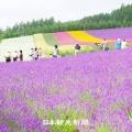 포커스109(홋카이도_후라노).jpg